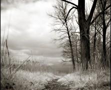 Salmo 9: O caminho secreto